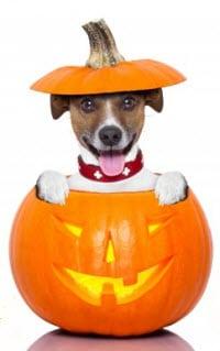 halloween_pup