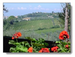 italy-vineyard